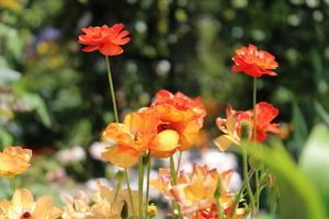 眩しい春 - なちゅフォト