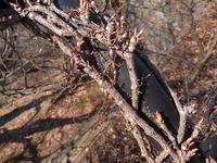 桜が咲いた - nshima.blog