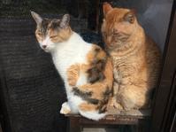 こんなわけで姉んちの猫5匹 - ちょっと田舎暮しCalifornia