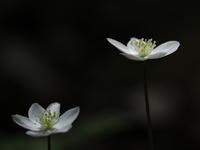 里山の春 - きまぐれ花旅