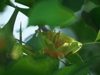 赤塚植物園 - いや、だから 姉ちゃん じゃなくて ネイチャー・・・
