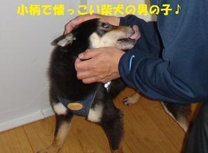 新人さん来ましたー! - もももの部屋(家族を待っている保護犬たちと我家の愛犬のブログです)
