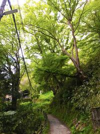 吉野山は新緑でいっぱいです! - 吉野山 吉野荘湯川屋 あたたかみのある宿 館主が語る