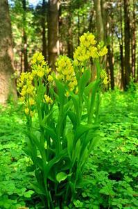 春の森(4月) - つれづれ日記