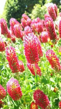 浜名湖ガーデンパークのお花たち - Emily  diary