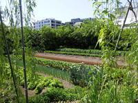 ビルの屋上に農場。街のオアシス誕生。 -  「幾一里のブログ」 京都から ・・・