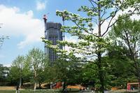 新緑が目立つ---自由散歩@撮影 - くにちゃん3@撮影散歩