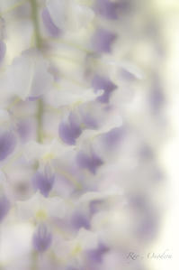 またもや姪っ子と撮影会 - Ryo,Onodera Photography