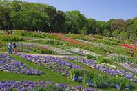 一面パッチワークのようなお花畑♪里山ガーデン - Vivement les vacances! お休みが待ちどおしい