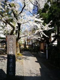 蒲生氏郷記念公園の桜 @福島県会津若松市 - 963-7837