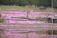 郡上市明宝の芝桜。 - 移動探査基地