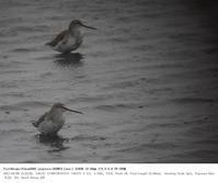 稲敷市浮島 2017.4.9 - 鳥撮り遊び