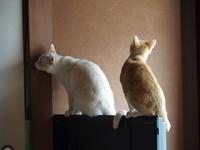 猫さん、テレビ壊れます〜 - 3色猫だんご+1