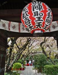 京の名残の桜を求めて(10)雨宝院の歓喜桜・観音桜黄 - たんぶーらんの戯言