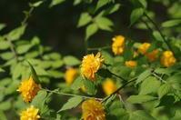 「極彩色の庭 -京都城南宮 神苑ー」 - 心ざわめく街  -あらうんど京都-