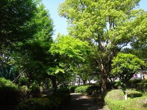 初夏の陽を浴びて歩く - 印旛沼ポタリング日記