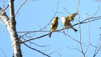 吾妻渓谷 - 山と鳥を愛するアナパパ