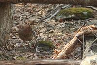 山道で出会った鳥 - THE FL LENS WAKU WAKU Mark II