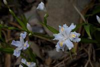 大好きな花☆彡 - DAIGOの記憶