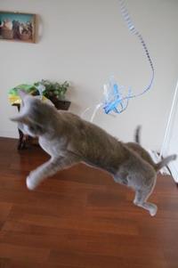 大阪猫族、緊急開催のお知らせ - ご機嫌元氣 猫の森公式ブログ