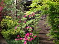 石楠花の咲く家 - エンジェルの画日記・音楽の散歩道