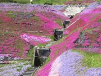 『 芝桜とこいのぼりと水車 』( ・◡・ )♫•*¨*•.¸¸♪ - 花と夢遊び