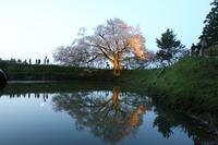 2017 桜 4月14日 浅井の一本桜 - 光と影のさがしもの