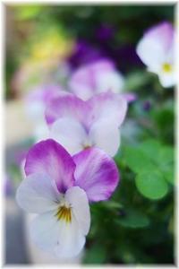 庭を彩ってくれて ありがとう・・・ - 日々楽しく ♪mon bonheur