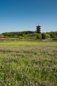 備中国分寺周辺のれんげ畑 - Omoブログ