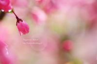 艶麗の花 - 流れのほとり