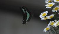 良い天気 - 紀州里山の蝶たち