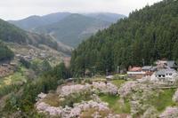 道すがら~ 出会った桜たち - katsuのヘタッピ風景