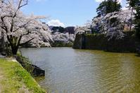 お堀の桜 - 四十の手習い 自転車と写真が好き