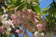 桜と初めての撮り鉄 - 季節の風を追いかけて