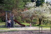 ※ 大平森林公園の桜も、ほぼ終わりでした - 気まぐれ写真工房 new