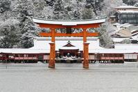 雪の宮島(厳島神社) - daistarの自己マンライフ