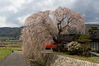 沿線桜 - daistarの自己マンライフ