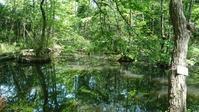こんぶくろ池と手賀沼の夕陽 - ねこ・ねこ・え・ねこ・ときどき・ほん