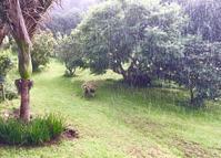 雨の香りとバスハウス/ Working Away in Rain - アメリカからニュージーランドへ
