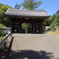 四国第10番 切幡寺(きりはたじ) - 樹の神様
