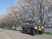 今年の桜 - 温 故 知 新 志