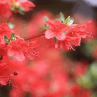 がんこ氏の場合⑵ - 鯵庵の京都事情