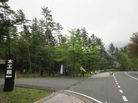 大田市の花「レンゲツツジ」開花しました! - 木もぐれ日記 ( 三瓶 木工館 )
