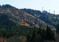 春紅葉 - 源爺の写真館