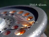 Ephemerellidae - TAKA-Qizm