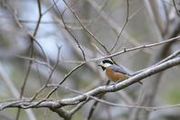 鳥がいろいろ - Bird-Watching Journal