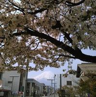 富士山散歩。 - 無為的日子。ムイ、ナ日々。