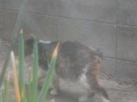命名 - 愛犬家の猫日記