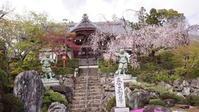京都 洛西の桜 - 丙午の気分次第日記