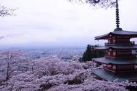五重塔と桜 と富士山は何処行った。 - 丙午の気分次第日記